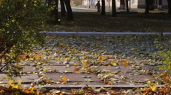 The wind blows away the yellow leaves from the road in the autumn park - stock footage