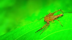 Brown Spider Darts Under a Leaf Stock Footage