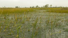 Water plant in the national swamp reserve. Autumn daytime. Smooth dolly shot. Stock Footage
