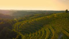 4K Aerial: Lift and Reveal Vineyard Land with Sunset Stock Footage