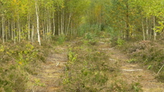 Wild road in the national wildlife reserve. Autumn daytime. Smooth dolly shot. - stock footage
