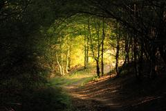 natural forest tunnel road - stock photo