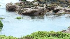 Stock Video Footage of Pulsing tide pool on coral reef