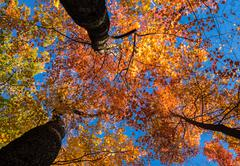 Looking up at bright sunlit fall leaves Kuvituskuvat