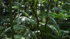 Pan shot tropical jungle Stock Footage