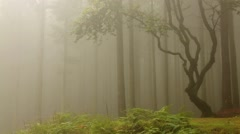 Cloud forest with fog and trees Stock Footage