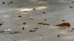 The wind blows the leaves on the ground Stock Footage