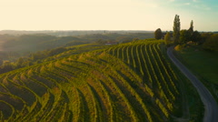 4K Aerial: Along the Grapevine Lines on the Hills - stock footage