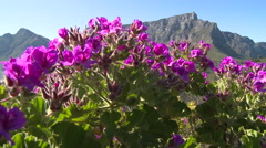 Table Mountain,Cape Town Stock Footage