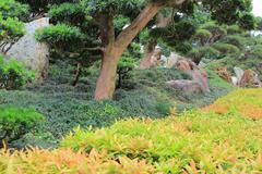 Leaning bonsai tree, Chi Lin Nunnery, Hong Kong - stock photo