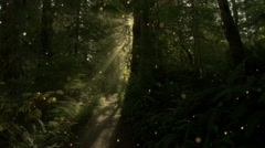 A small path leads through a magical forest - Forest 1001 HD, 4K - stock footage
