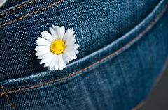 Bouquet of daisy in jean pocket Stock Photos