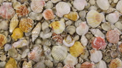 Wind along the coast with sea shells, approximation Stock Footage