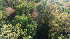 Aerial Autumn Fall Forest Trees, 4K Stock Footage
