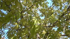 highspeed green leafs moving,slow motion of the leafs - stock footage