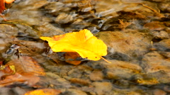 Yellow leaf in flowing creek water - stock footage