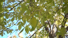 Highspeed green leafs moving,slow motion of the leafs Stock Footage