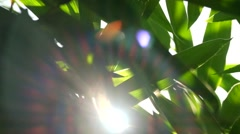 Sun shine thorugh the blowing on wind bamboo leaves Stock Footage