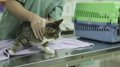 MVI 0696 Veterinarian examines a cat gently Stock Footage