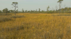 Golden field in the wildlife reserve. Autumn daytime. Smooth dolly shot. - stock footage