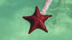 Holding a red starfish in his hand Stock Footage