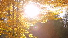 Autumn tree in park Stock Footage