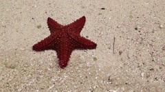 A red starfish Stock Footage
