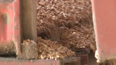 Grain of wheat slide out of the trailer Stock Footage