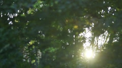 Sunset penetrate between the branches of the tree Stock Footage