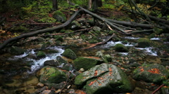 Forest Stream with Fallen Trees - stock footage