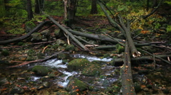 Stock Video Footage of Stream with Fallen Trees