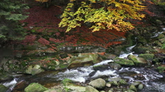 Stock Video Footage of Stream in Autumn Forest