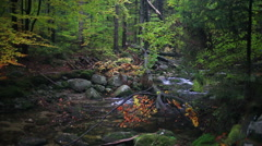 Fall Stream with Fallen Tree - stock footage
