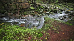 Stream in Mountain Forest Stock Footage