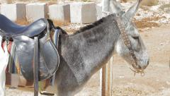 A donkey standing up tied to a pole Stock Footage