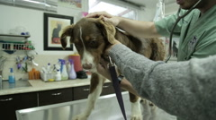 MVI 0634 Veterinarian inspecting a dog breath inside a pet clinic - stock footage