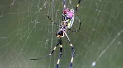 Scary Spider on Webs - stock footage