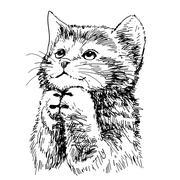 Lovely kitten hand drawn vector Stock Illustration