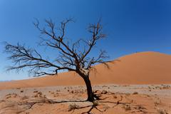 Dune 45 in sossusvlei Namibia with dead tree Stock Photos