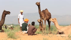 Indian men and herd camels attended the annual Pushkar Camel Mela Stock Footage