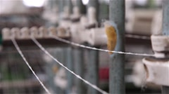 linen lines from industrial loom from manufacturing industry - stock footage