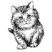 Lovely kitten hand drawn Stock Illustration