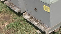 Bees buzzing around the hive Stock Footage
