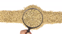 Magnifying glass increases the oats grains Stock Footage