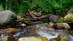 Natural tropical stream scene Stock Footage