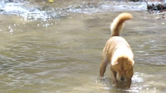 Stock Video Footage of dog dig sand under the pool