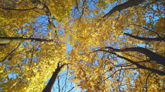 Colorful autumn treetops in fall forest with blue sky and sun shining though Stock Footage
