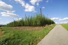 Hop cultivation Stock Photos