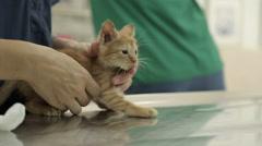 MVI 0517 Adorble kitten in vet clinic Stock Footage