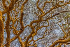 Treetop detail with lot of branches Stock Photos